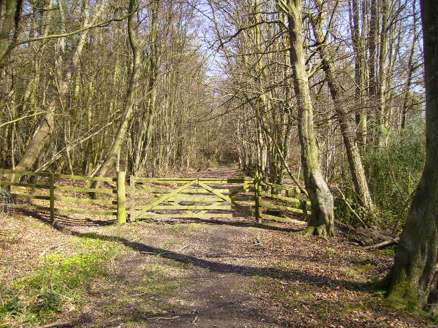 Track leading into Estroundel Wood just off the St. Cuthbert's Way
