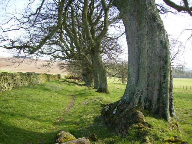 St Cuthbert's Way approaching Harrietsfield
