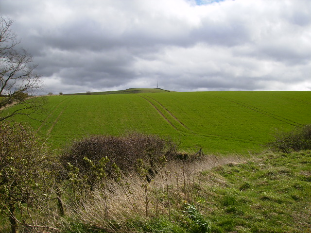 View over cropped field towards Linton Hill