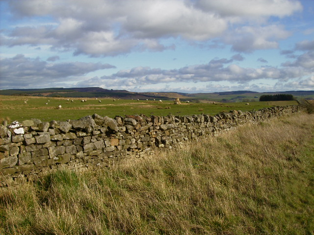 Dry stane dyke and grazing land beside the A68 road