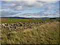 NY8890 : Dry stane dyke and grazing land beside the A68 road by Phil Catterall