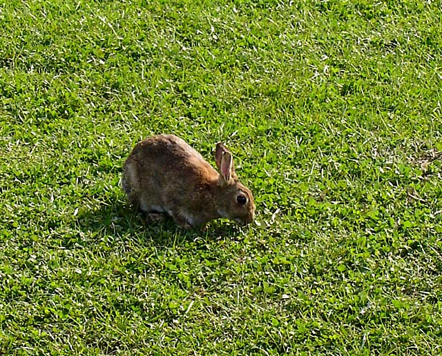 Rabbit beside the cyclepath