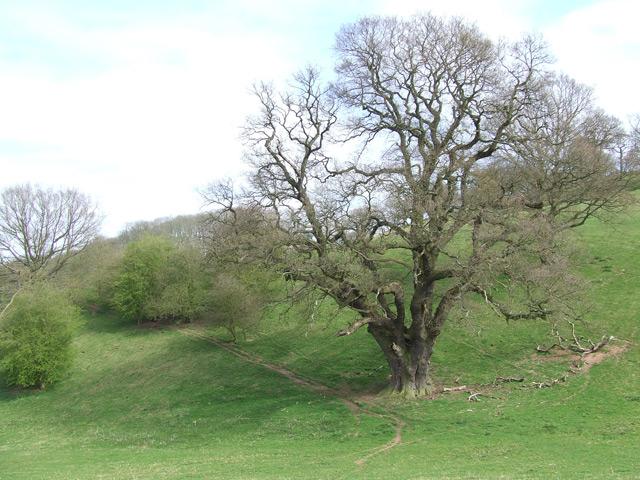 Country Park Hillside, The Sheepwalks, Staffordshire