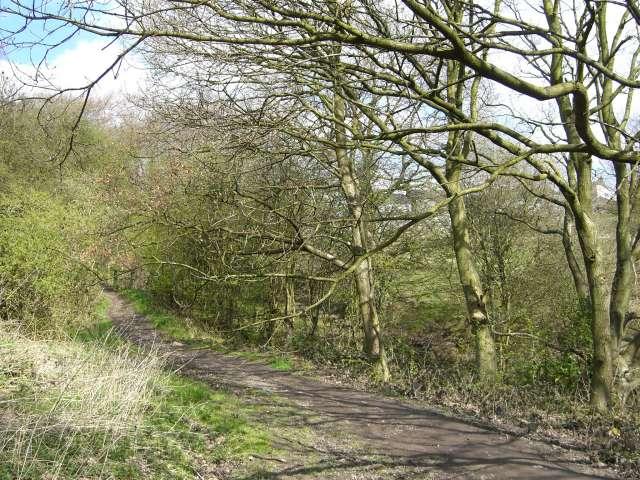 Footpath at Wood Lane