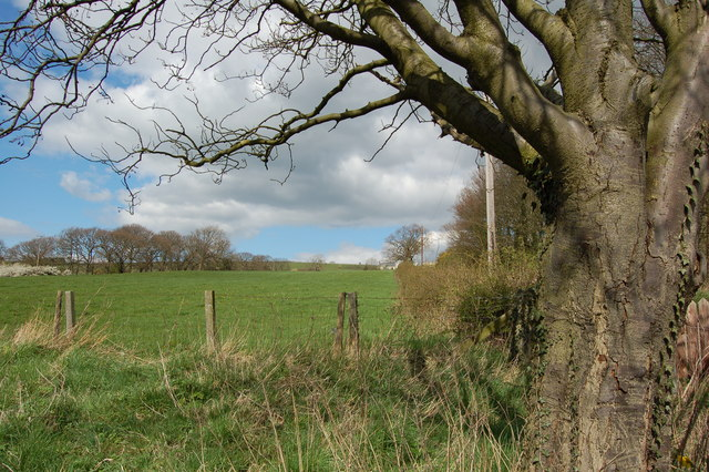 Field in front of Langley West House Lanchester