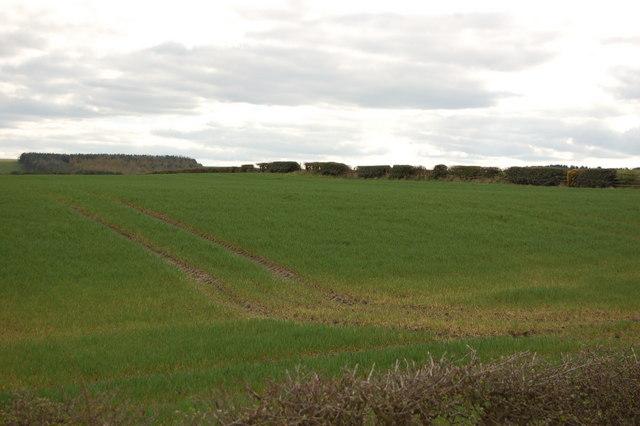 Farmland near Hedley Hill