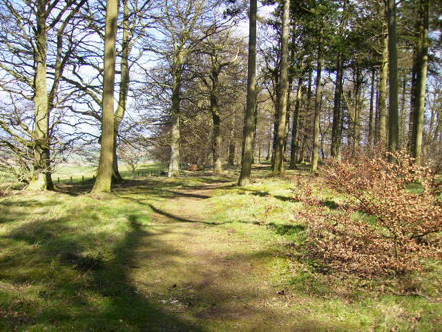 Inside Blindwells Plantation on the rerouted (2003) section of St.Cuthbert's Way