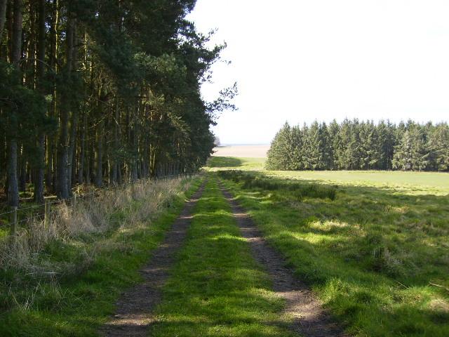 St.Cuthberts Way alongside Long Plantation near Cessford