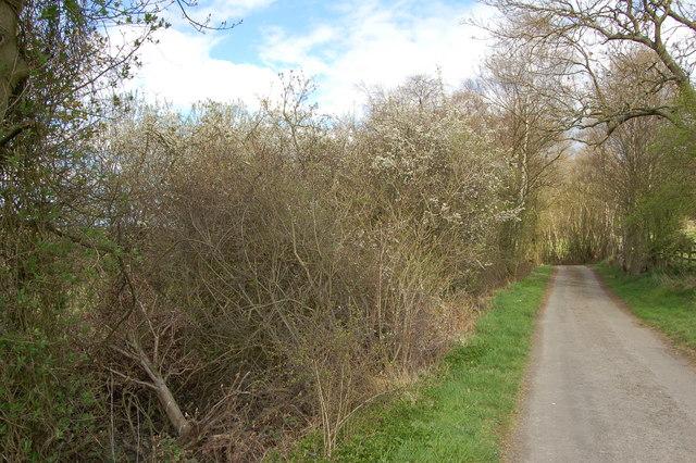 Road to Greenwell Farm