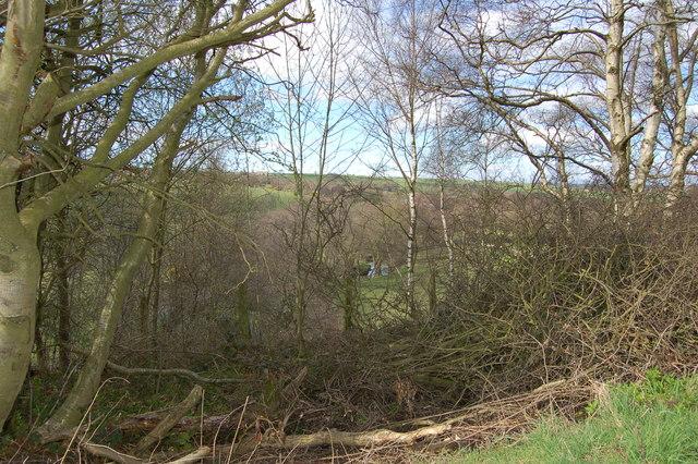 River Browney through trees above Throstle nest Farm