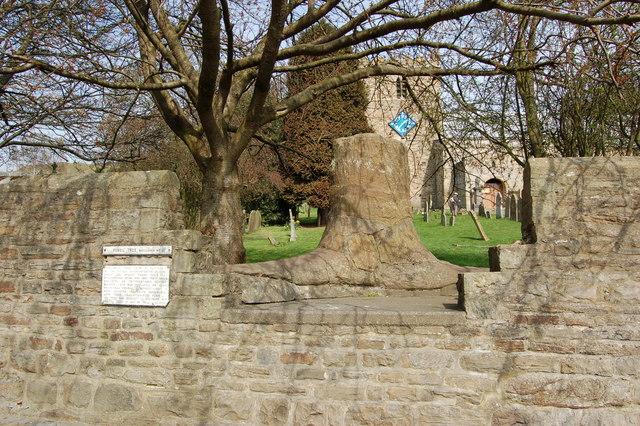 Fossilised tree Stanhope