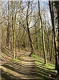 SE1223 : The path through Cromwell Wood, Southowram (1) by Humphrey Bolton