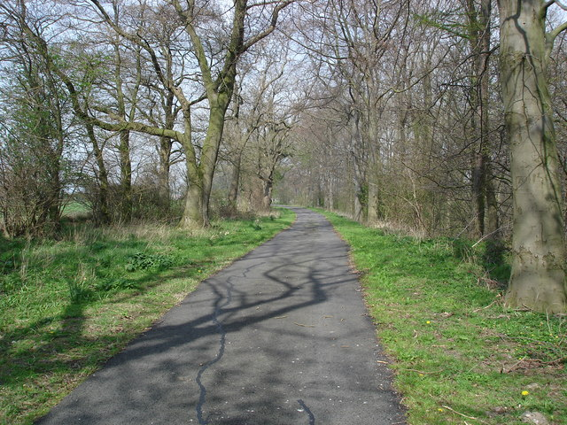 Beverley Wood, north of Great Smeaton