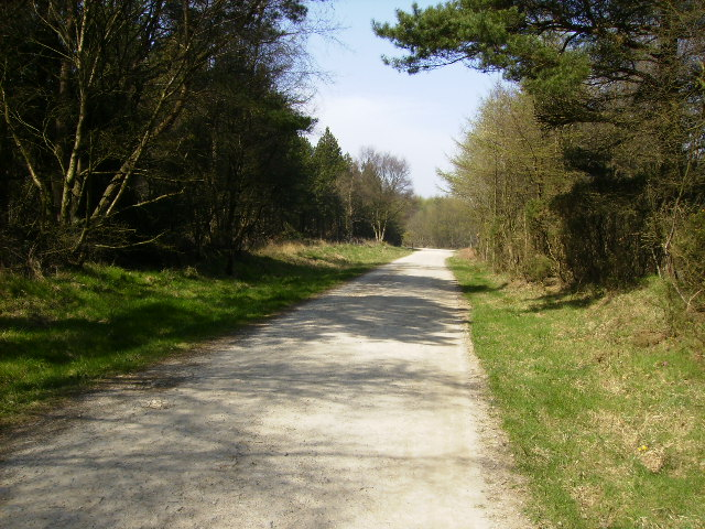 Forestry track in Wykeham Forest