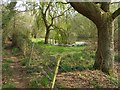 SZ3397 : Pond west of Bull Hill Farm by Jim Champion