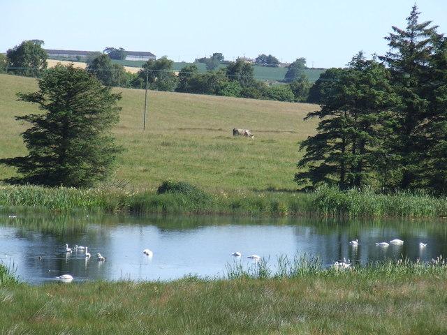 Angerton Lake