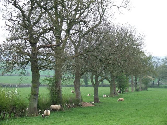 Grazing near Compton Hall Farm, Staffordshire