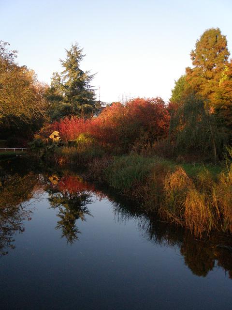 Water Gardens in Harlow Town Park