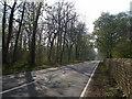 NZ4124 : Wynyard road looking west towards the quarry. by Carol Rose