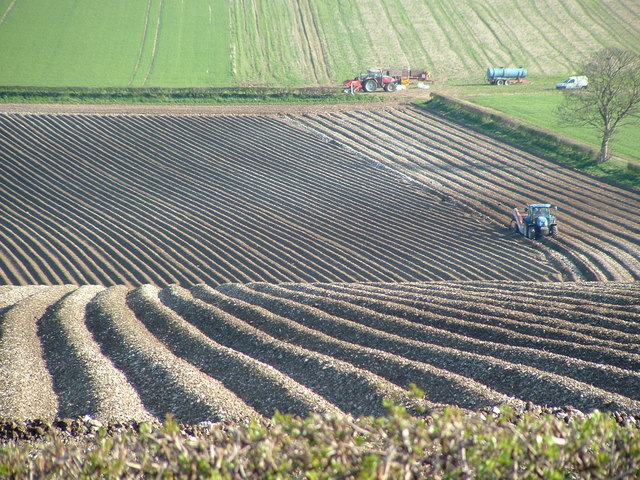 Patterns in the Landscape - potato ridges between Kilham and Rudston