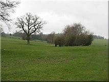 SO4386 : Farmland near Wistanstow by Richard Webb