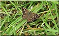 SP4931 : Speckled Wood butterfly by Nick Smith