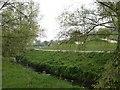 SJ8544 : Lyme Valley Parkway by Steve Lewin