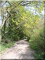 SU7834 : Eveley Lane by Colin Smith