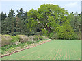SO7689 : Crop Field and Woodland, near Wooton, Shropshire by Roger  Kidd