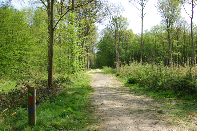 Dering Wood - main path by Robin Webster