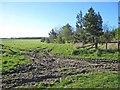 NZ2733 : Field near Spennymoor by Oliver Dixon