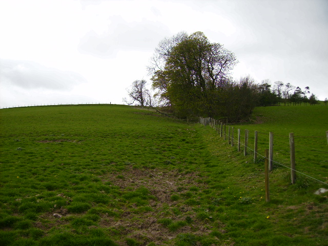 Field boundary and small wood below Harrow Law
