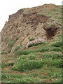 SS2008 : Crumbling cliff with thrift, north of Northcott Mouth by David Hawgood