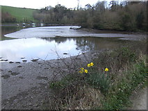 SW7724 : Gillan Creek by Jonathan Billinger