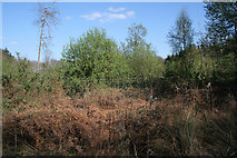 TF0626 : New woodland in Callan's Lane Wood by Kate Jewell