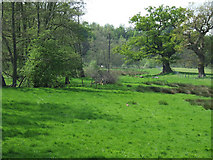 SO7598 : Grazing land by the brook, Stableford, Shropshire by Roger  Kidd