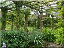 SU8612 : The Pergola West Dean Gardens by Chris Gunns
