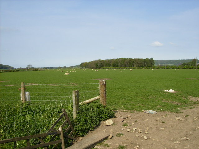 View to Mill Holm Plantation from The Ebor Way