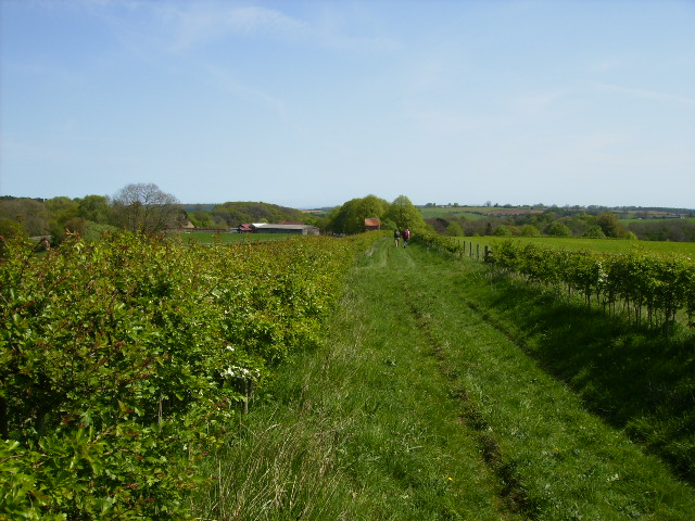 Green lane and public right of way to Potter Hill Farm