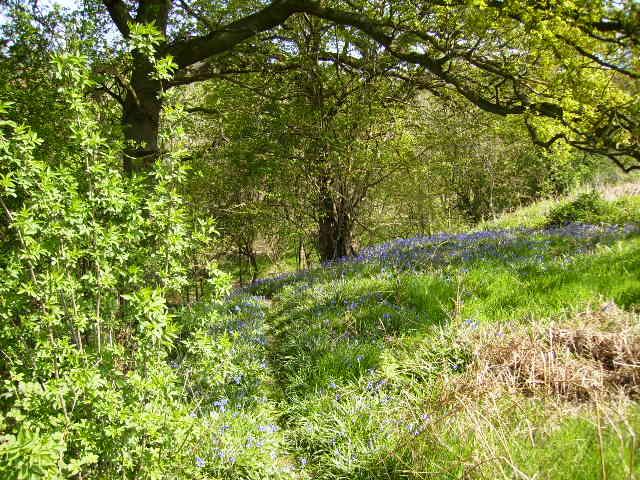 Woodland near Potter Hill Farm