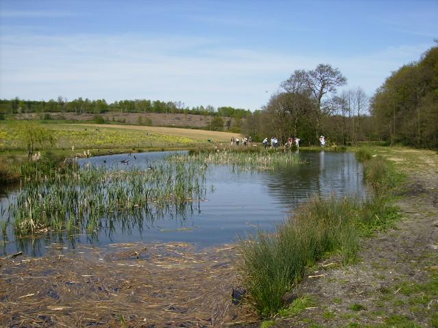 Man made pond near Soulby Wood