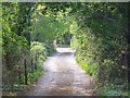 SU2723 : Shady lane near Sherfield English by David Martin