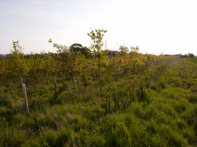 New woodland and hedgerow establishing itself nicely
