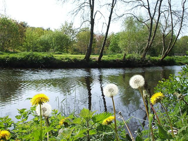 Nettles and Dandelions, Omagh