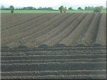 SJ4118 : Furrows, looking West by David Luther Thomas