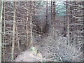 SJ2433 : In the woods at Cefn Coch by Jeff Tomlinson