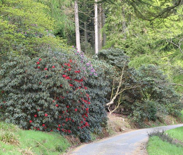 Younger Botanic Garden - Benmore