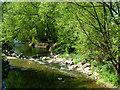 SP5176 : River Avon, Brownsover by Stephen McKay