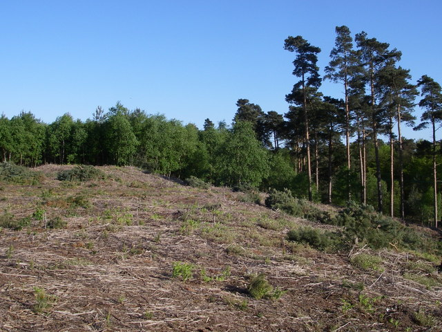 Tumulus in Tunstall Forest