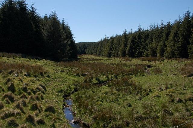 Stream, Capanagh Wood near Larne